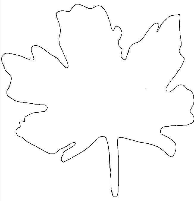 Раскраски контуры для вырезания листья детям  Контур кленового листка