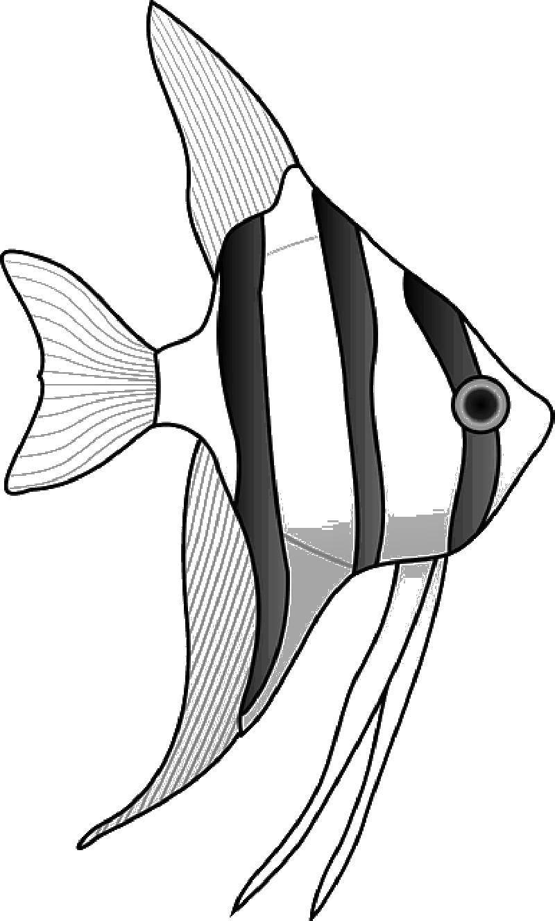 раскраски рыба рыбы