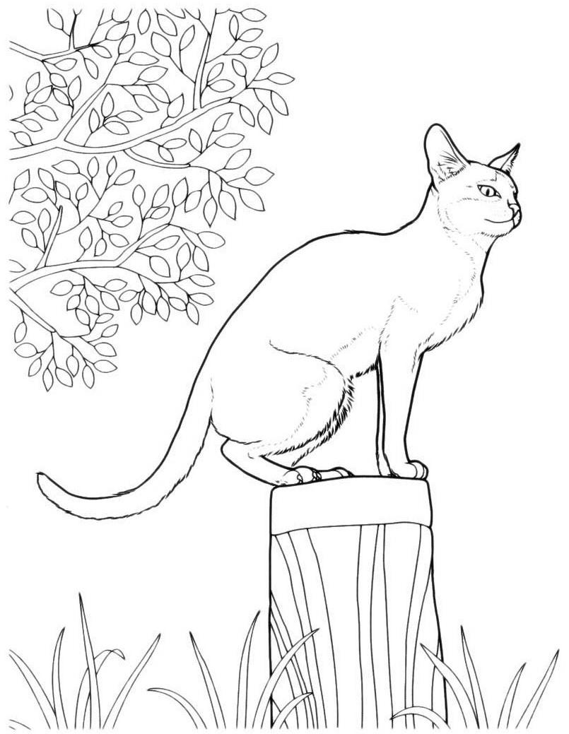 раскраски кошка кот котята