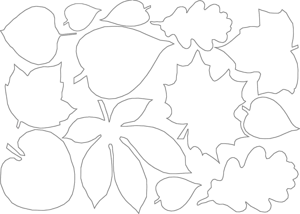 Раскраски контуры для вырезания листья детям  контуры листьев для вырезнаия
