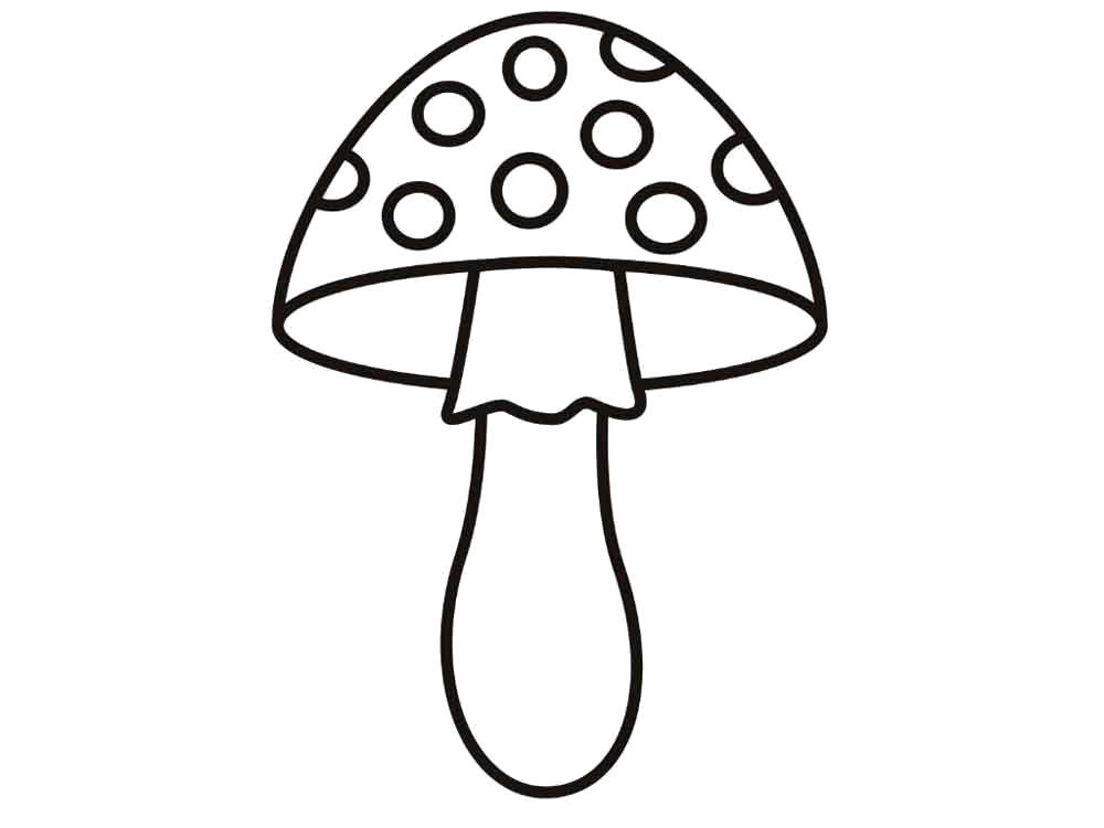 Раскраски с грибами контуры грибов для школьников  гриб