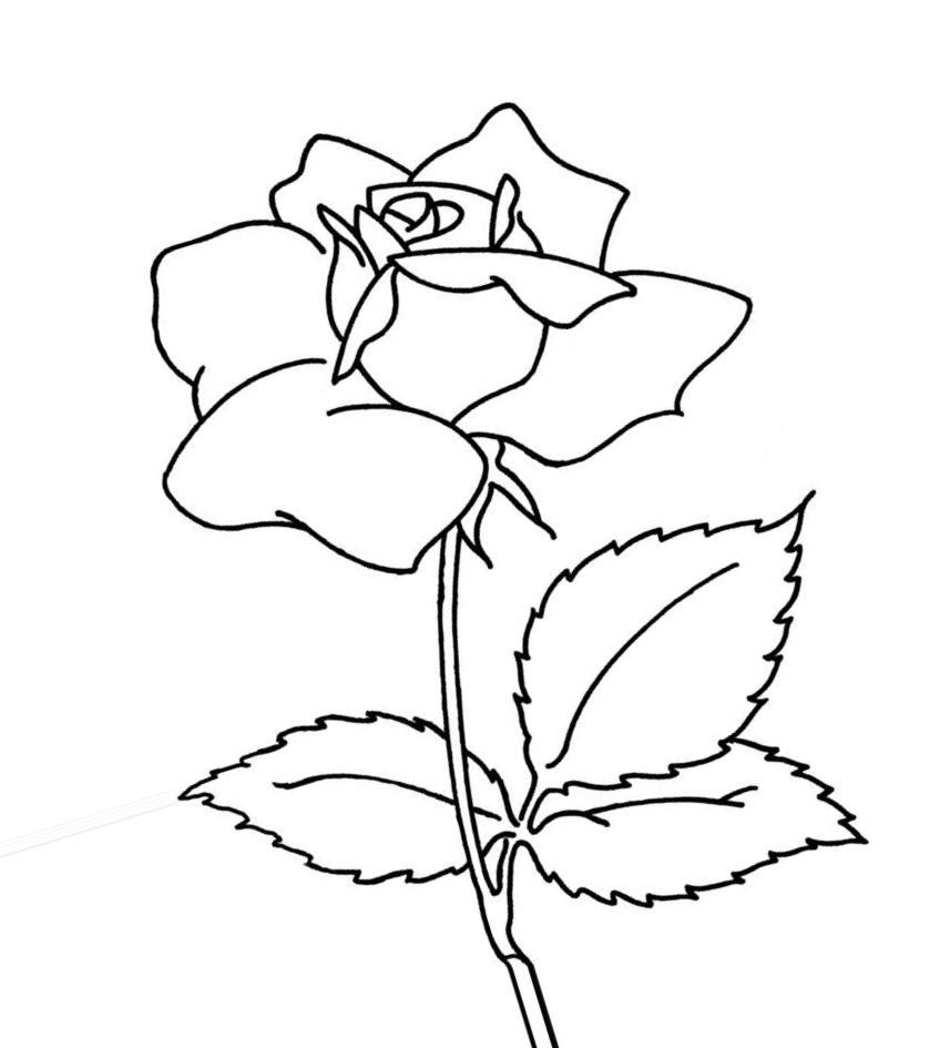 цветы раскраски для детей с цветами раскраски на тему цветы