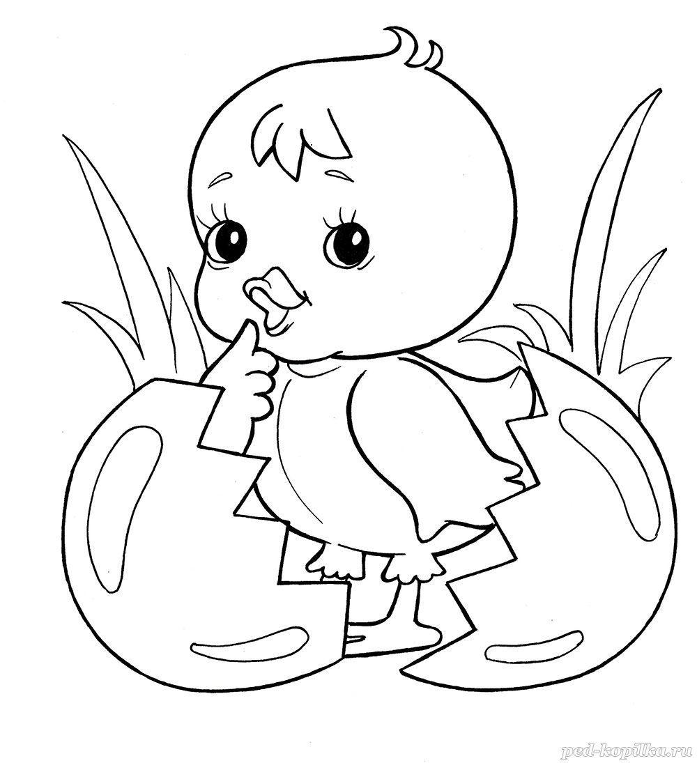 раскраски на тему цыплята для детей
