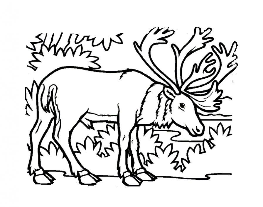 Раскраски животных для мальчиков и девочек (230 рисунков) | 706x896