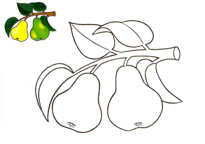 раскраски фрукты яблоки бананы груши персики виноград