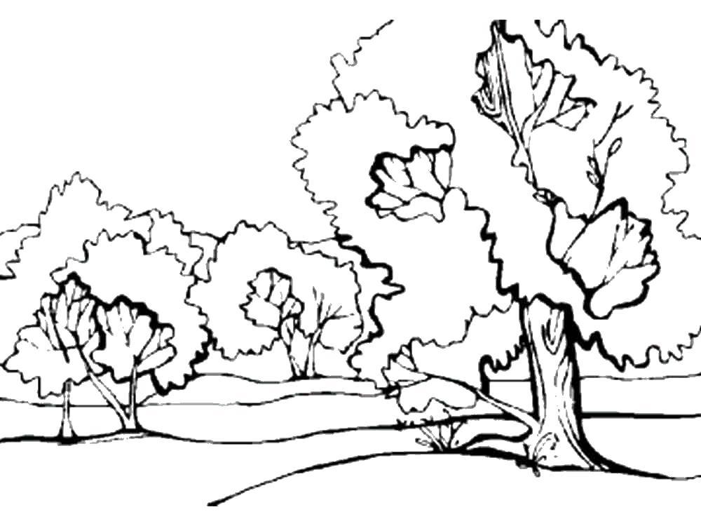 раскраски детские с лесом онлайн бесплатно раскраски для ...
