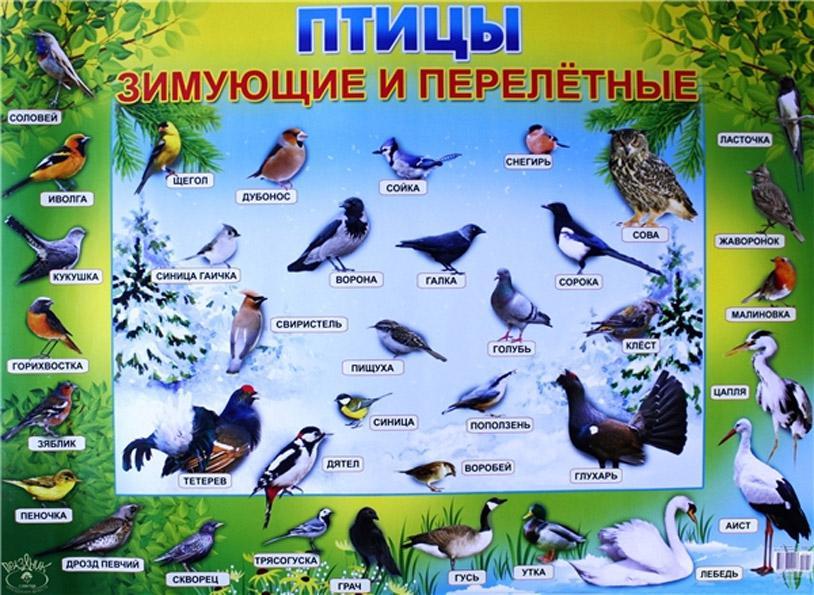 Биология Материалы и пособия про животных, птиц, растения и т.д. для уроков по биологии и естествознания