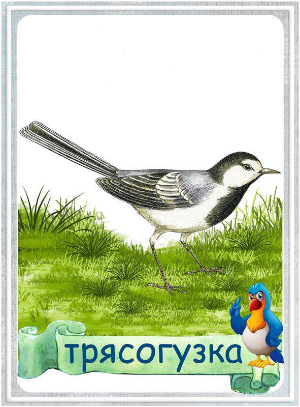 Карточки птицы Карточки птицы. Карточки для школьников. Карточки на уроки познания мира