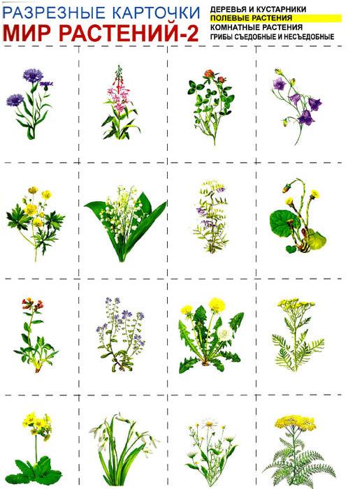 Карточки растения Карточки растения для детей, карточки с растения для школьников