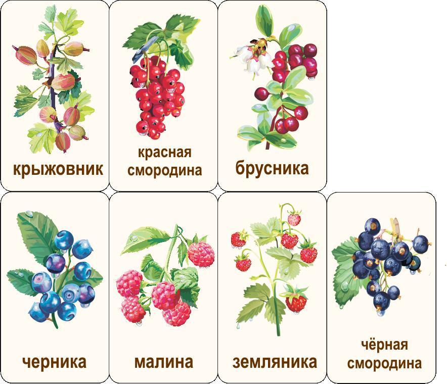 Карточки ягоды Карточки ягоды. Карточки ягоды для занятий в начальных классах. Карточки домана ягоды