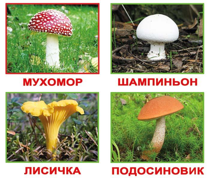 Карточки грибы Карточки грибы. Карточки грибы для занятий в начальной школе. Карточки домана грибы. Учим съедобные и ядовитые грибы, готовимся в поход.