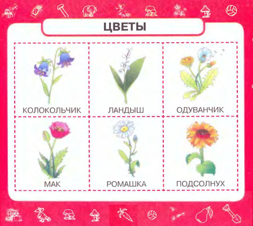 Карточки цветы Карточки цветы для девочек. Карточки цветы для занятий в детском саду. Карточки домана цветы. Карточки цветы для юных флористов