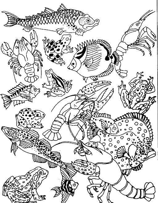 Раскраски морские обитатели  Раскраски морские обитатели, раскраски рыб, киты, раки, морские звезды, морские животные, медузы и другие