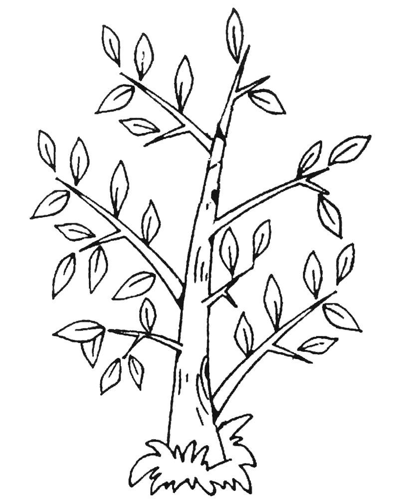 Раскраски Растения Раскраски Растения для детей. Раскраски про растения для школьников. Виды растений в раскрасках для детей.