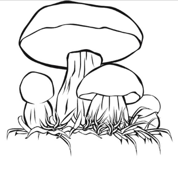Раскраски Грибы Раскраски с грибами для детей. Съедобные грибы раскраски. Раскраски про ядовитые виды грибов