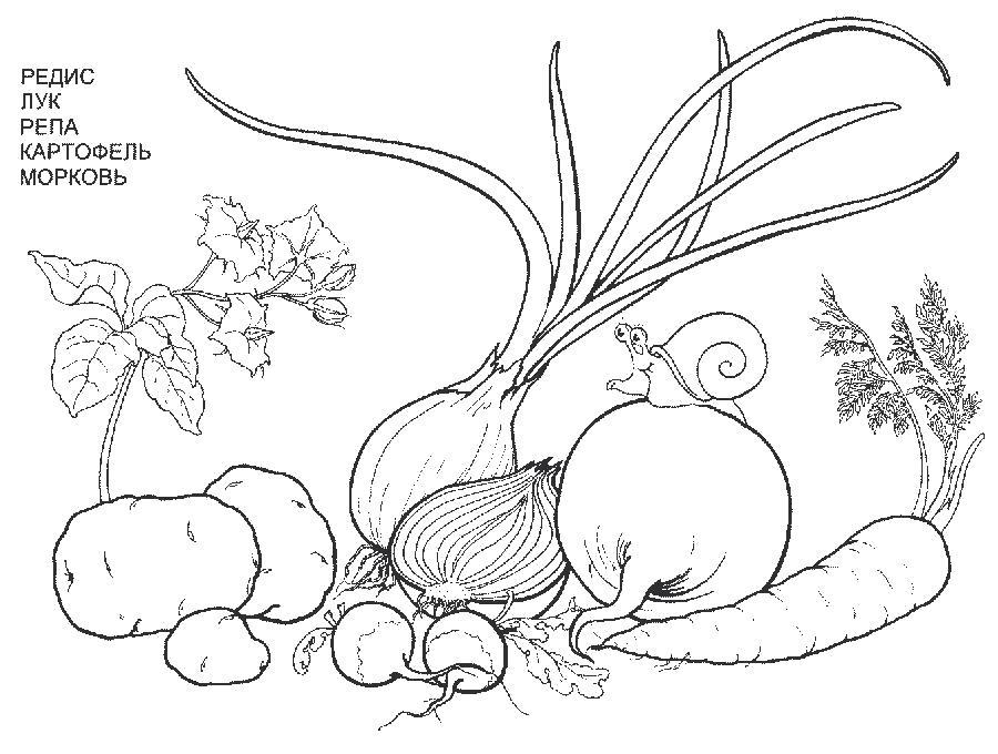 Раскраски Овощи Раскраски Овощи с названиями с детей