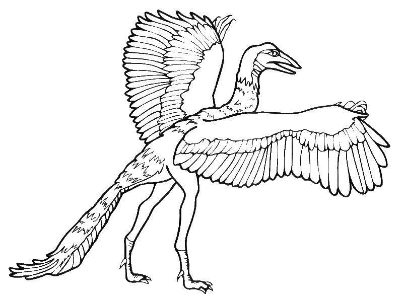 Раскраски Археоптерикс Раскраски Археоптерикс. Раскраски летающих динозавров