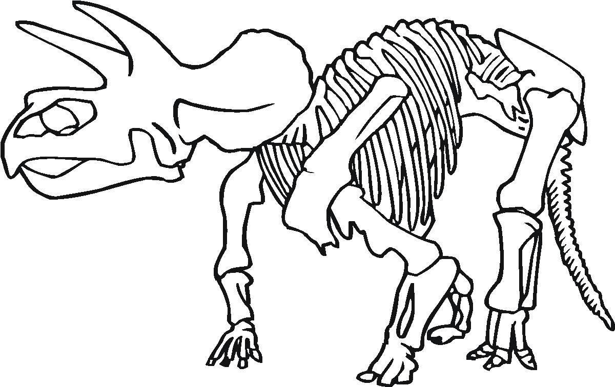 Раскраски скелет динозавра Раскраски скелет динозавра. Раскраски структур строения скелетов разных видов динозавров