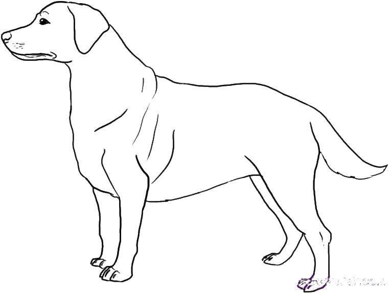 собака пес сабачка раскраски для детей