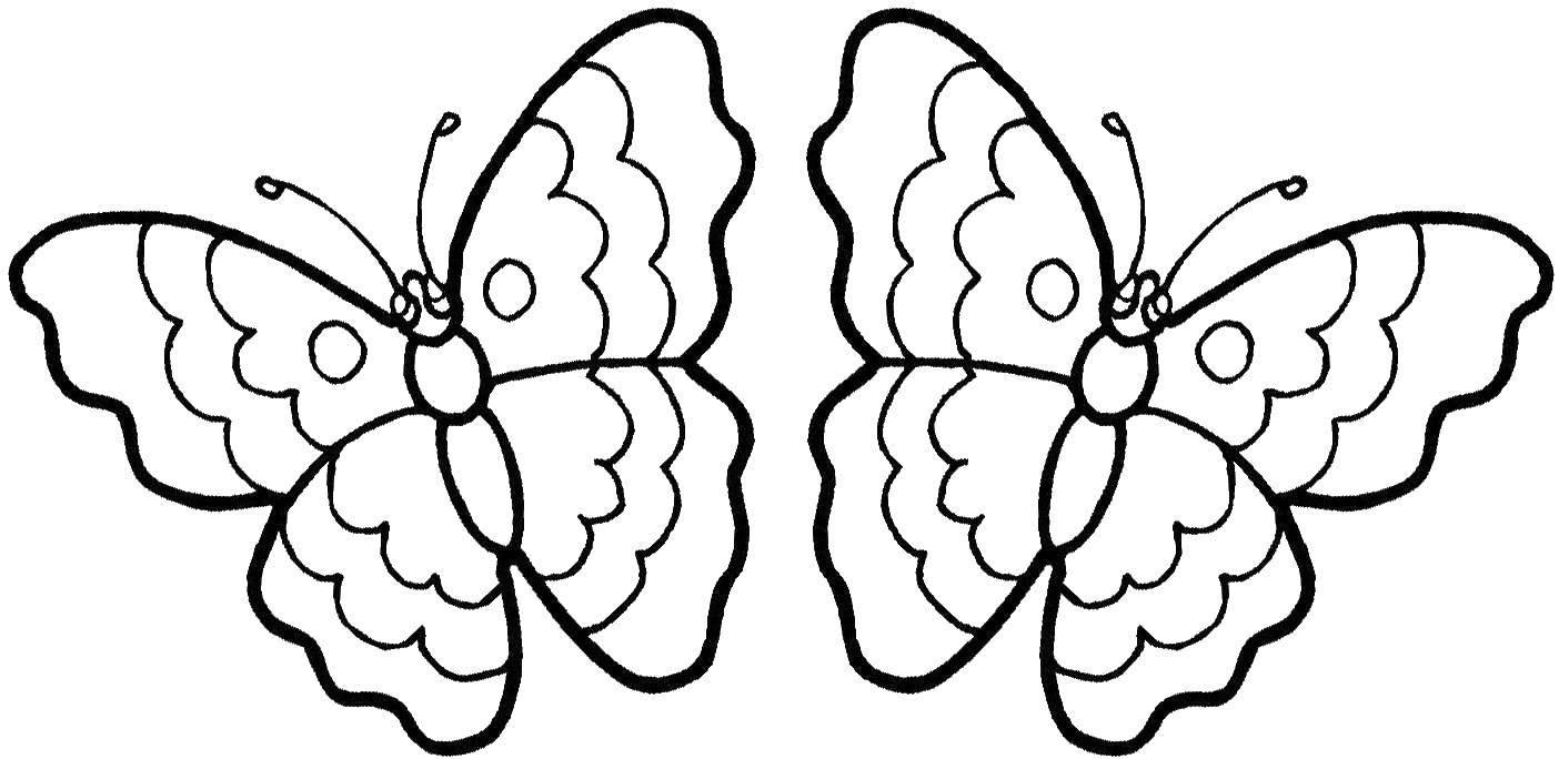 раскраски бабочки красивая бабочка