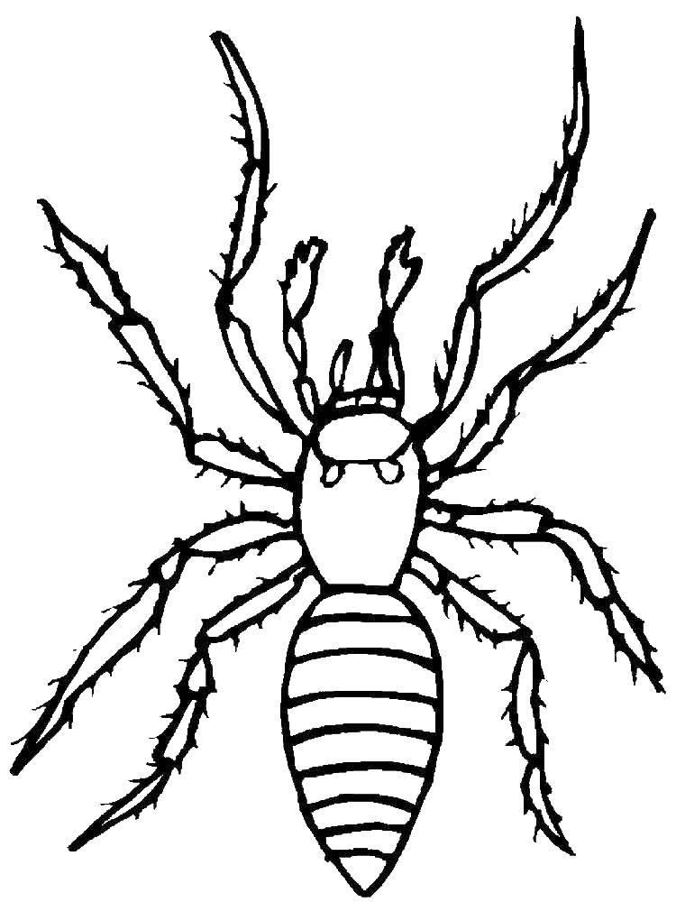 раскраски пауки паук паучки