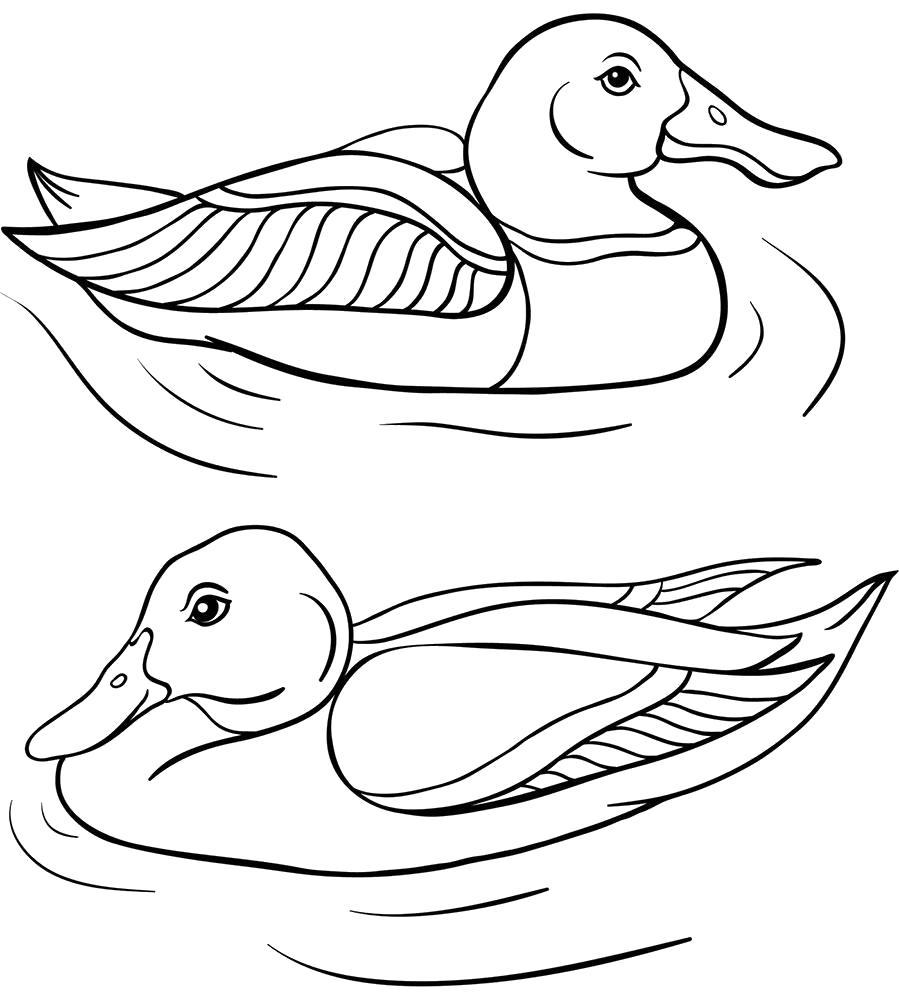 раскраски утка утята
