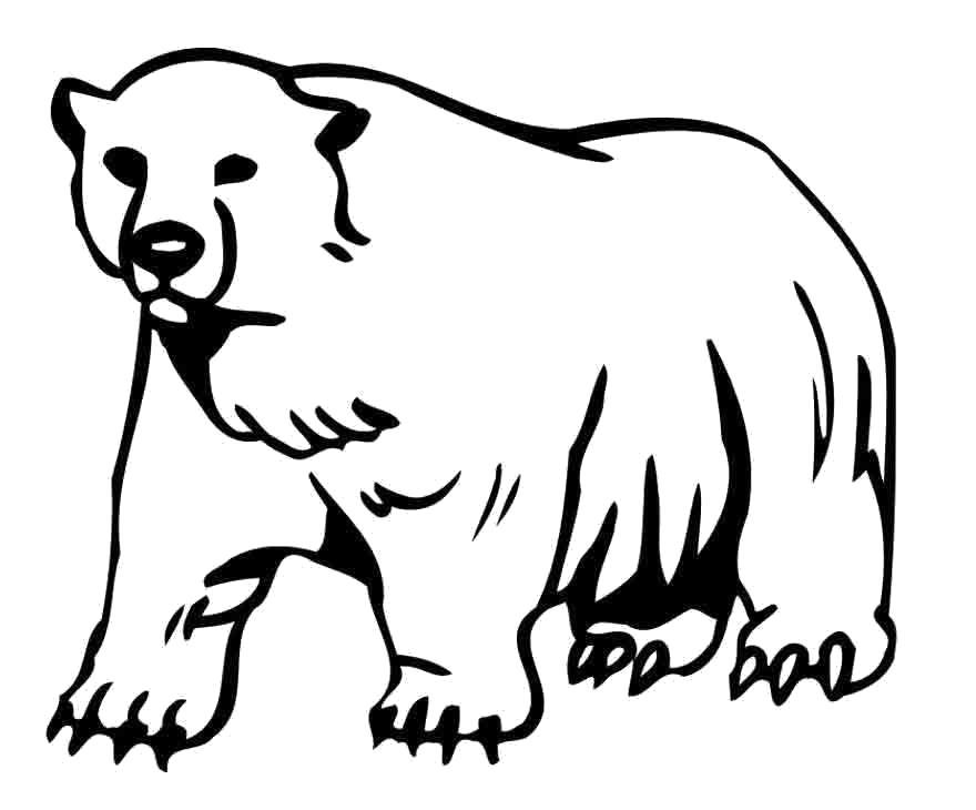 раскраски для детей медведи медведица медвежонок медведь
