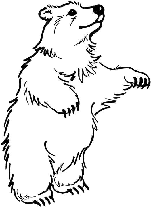 раскраски медведь