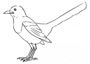 раскраски вороны ворон ворона сорока