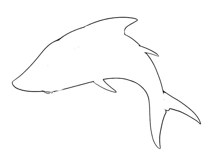 Раскраски контуры для вырезания морские обитатели   Раскраски контуры для вырезания морские обитатели