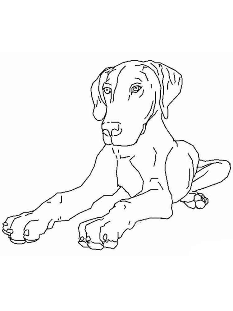 раскраски для взрослых и детей с изображением собак и щенков
