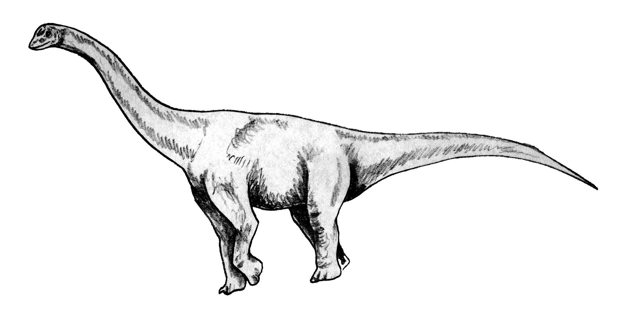 Зальтозавр Зальтозавр