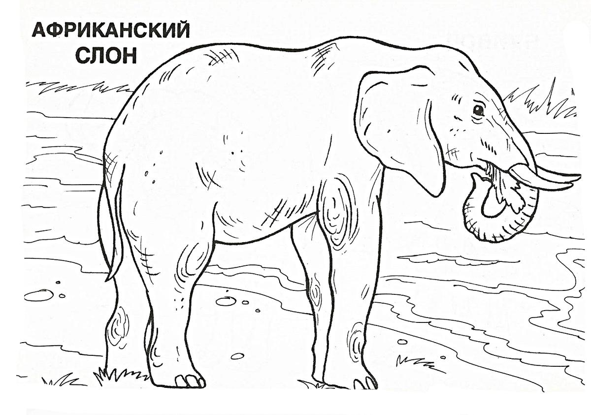 раскраски слон слоненок слониха слоны