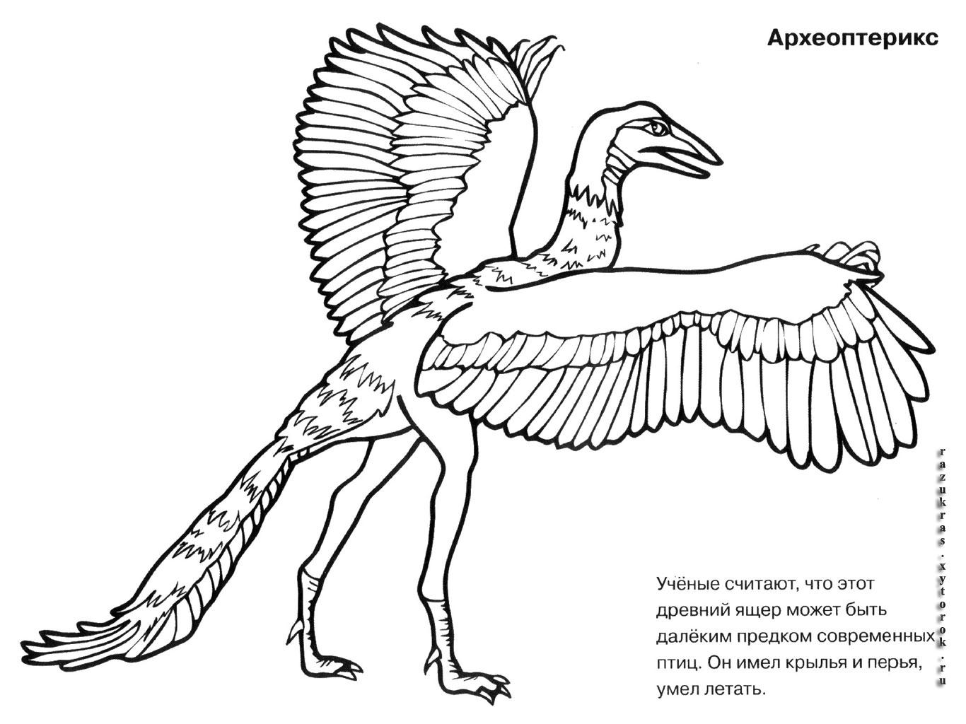 Раскраски динозавра археоптерикса Археоптерикс для детей.