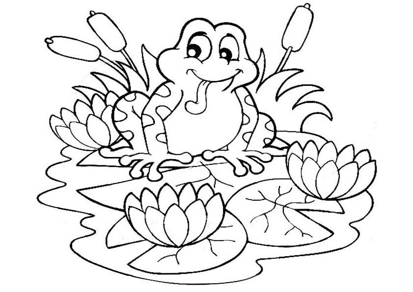 раскраски лягушка лягушки