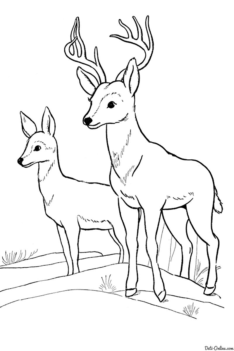 скачать бесплатные раскраски с животными раскраски детские с