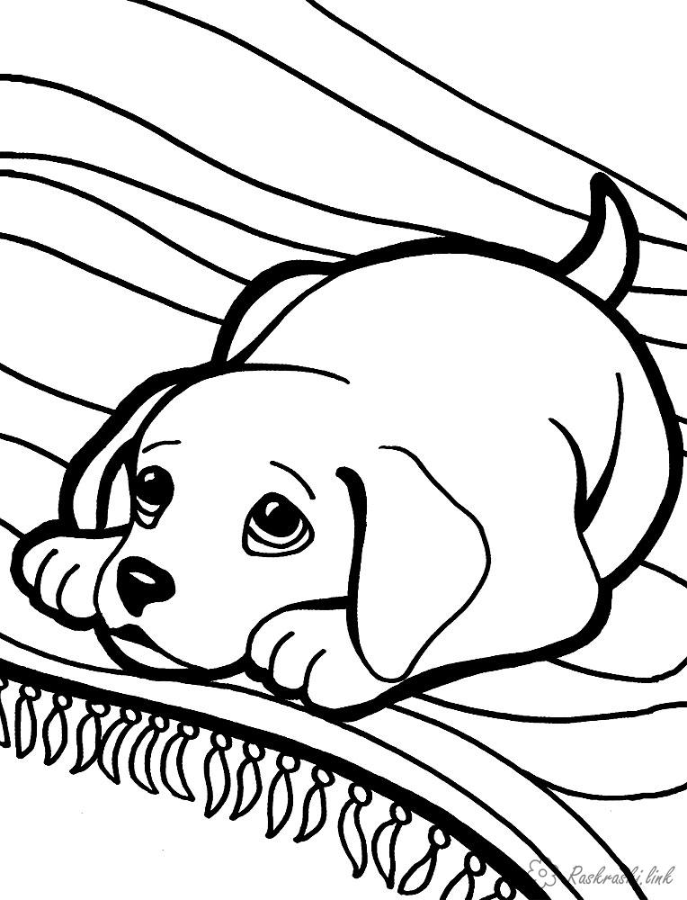 раскраски с собаками для взрослых