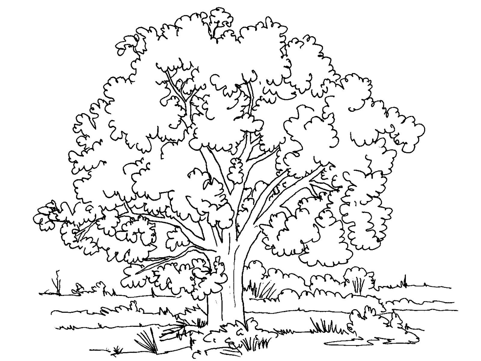 Раскраски деревья Раскраски Деревья для детей - это большой сборник картинок деревьев с листьями, без листьев, елки, дуб, береза, яблоня.