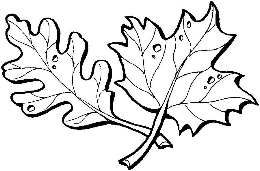 Раскраски Листья Раскраски, Листья деревьев, Осенние листья, весенние листья, раскраска кленовый лист.