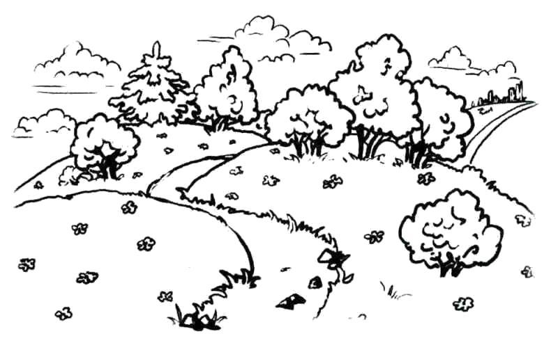 Раскраски лес Раскраски лес, деревья, растения, лесные раскраски для детей