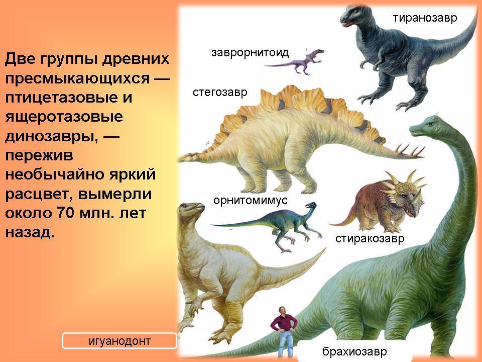 Динозавры Динозавры. Палеонтология для детей. Полезная информация в картинках про динозавров