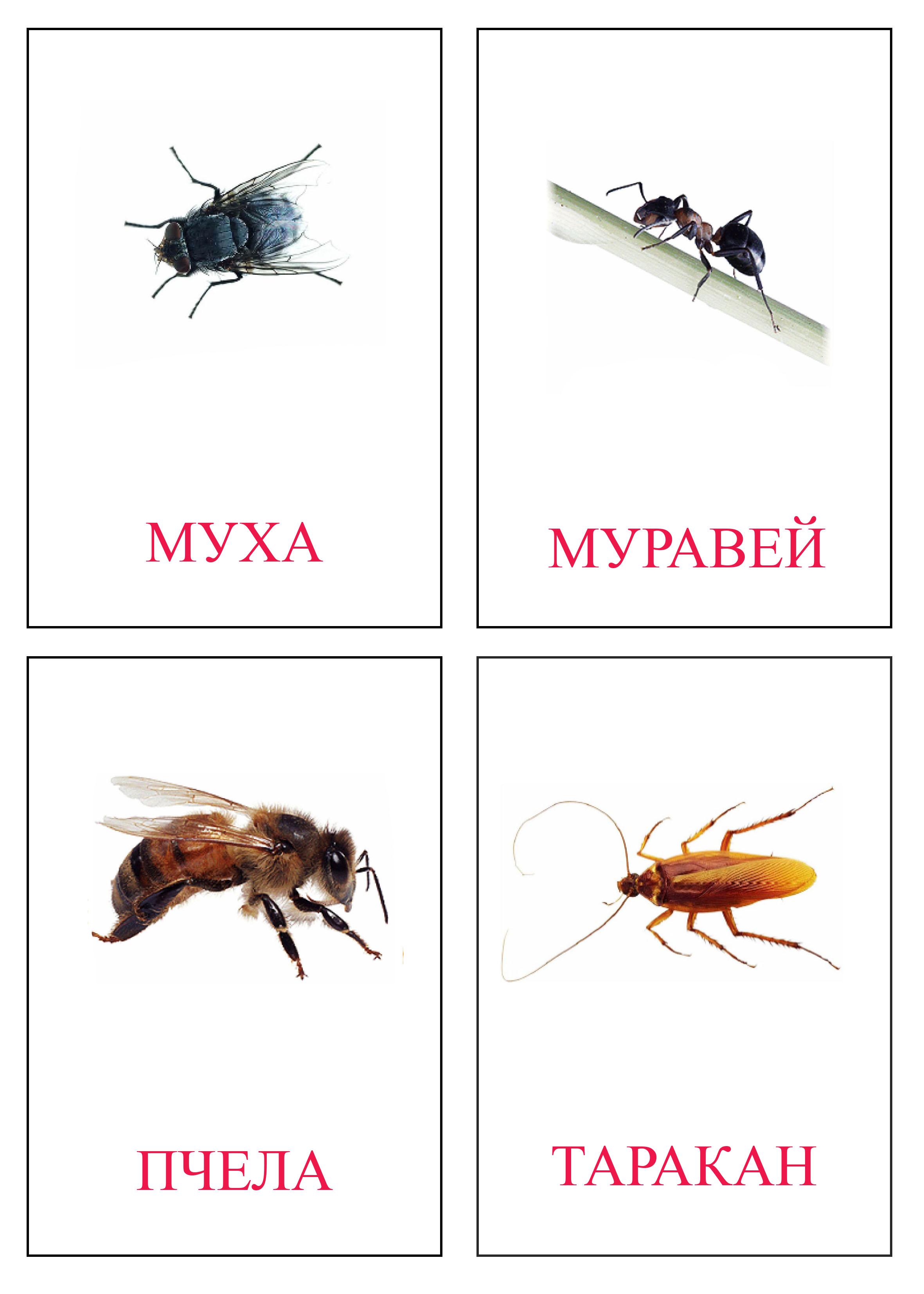 Карточки насекомые Карточки насекомые для занятий в старших группах детского сада. Карточки насекомые для любознательных. Карточки домана насекомые