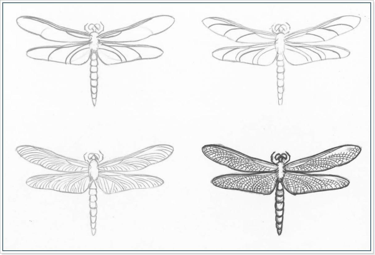 Рисуем насекомых Как нарисовать насекомое. Поэтапное рисование разных насекомых