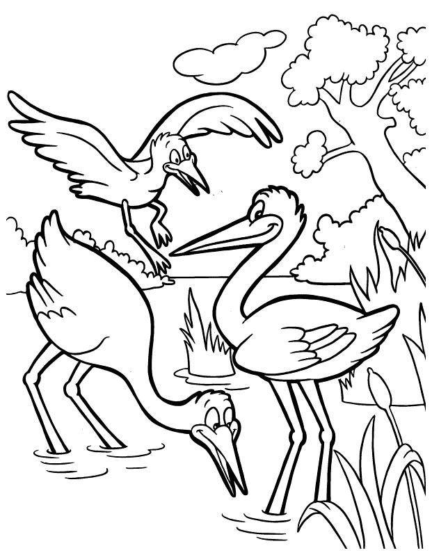 Раскраски птицы Раскраски птицы, дикие, домашние, птицы зоопарка, перелетные птицы, водоплавающие птицы