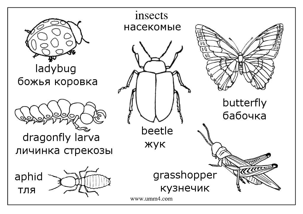 Раскраски насекомые Раскраски насекомые, стрекозы, бабочки, улитки, комары, гусеницы, пауки, муравьи, пчелы и другие насекомые