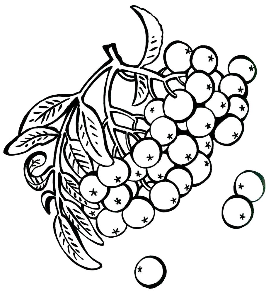 Раскраски Ягоды Раскраски Ягоды для детей. Раскраски с подписями названий ягод