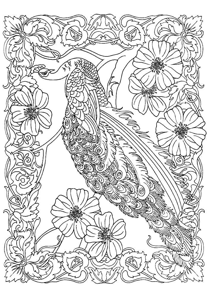Раскраски  сказочные птицы Раскраски  сказочные птицы. Раскраски красивых птиц против стресса